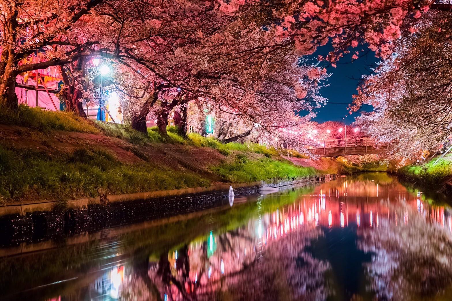 【穴場】千葉県の絶景桜の撮影スポットは?海老川に咲き誇る桜祭りの詳細情報についてご紹介!